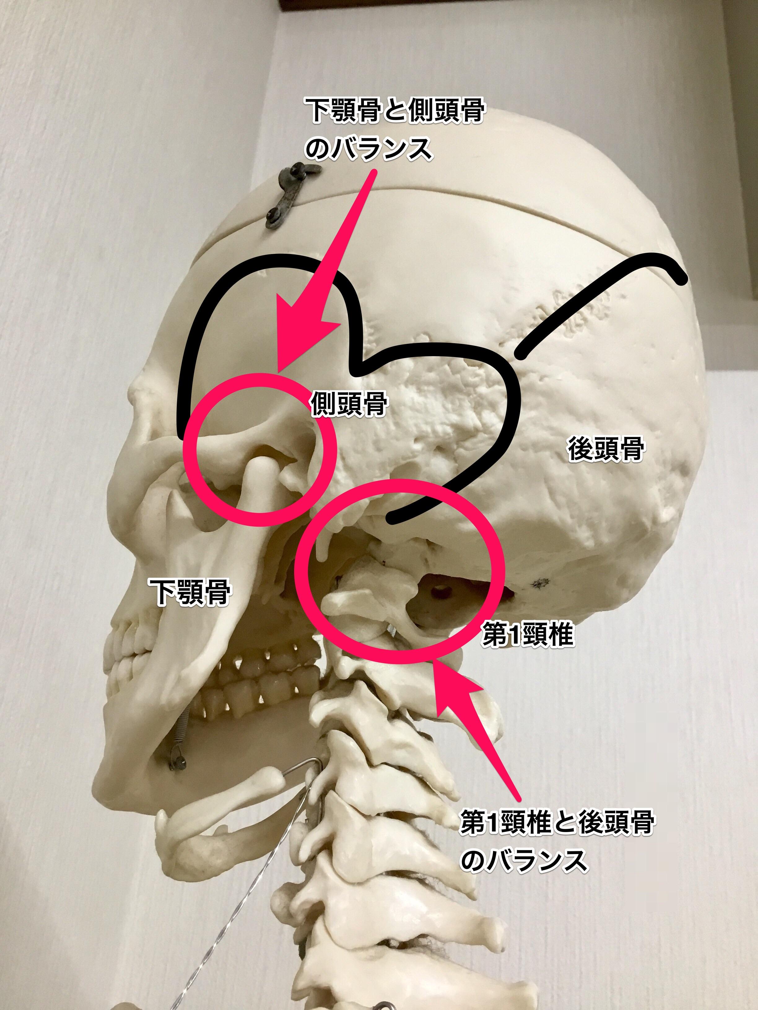 頸椎と顎関節の関係